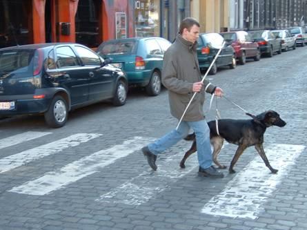 Passage piéton avec un chien