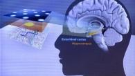Le prix Nobel de Médecine 2014 a été décerné à l'Américano-BritanniqueJohn O'Keefeet les NorvégiensMay-Britt Moser et Edvard Moserpour la découverte des cellules hippocampiques qui supportent le sens de l'orientation. La […]