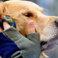 Créée en 1989, HANDI'CHIENS a pour mission d'éduquer des chiens d'assistance pour l'aide et l'accompagnement d'enfants et d'adultes en fauteuil ...