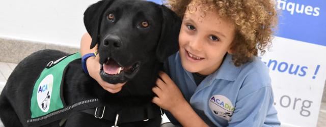 Aujourd'hui, nous allons vous parler des chiens détecteurs d'hypo ou d'hyperglycémie.